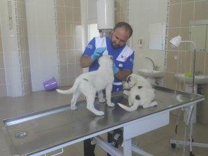 Hakkari veteriner kliniği hayat kurtarıyor