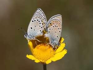 Nadir görülen kelebekler için harekete geçtiler...