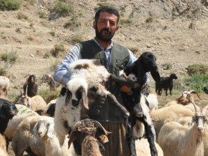 Yüksekova'ya İran'lı çoban...