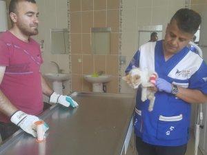 Veteriner ekipleri yaralı kediyi kurtardı