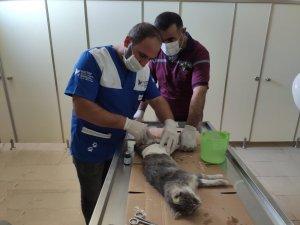 Hakkari'de aracın çarptığı anne kedi kurtarıldı