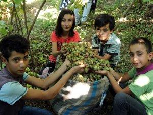Bitlis Hizan'da fındık hasadına başlandı