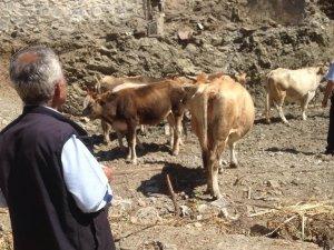 Zabıta ekiplerinden başıboş hayvanlarla mücadele