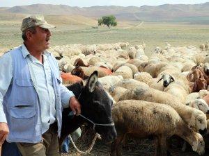 4 bin lira maaşla çalıştırılacak çoban bulunamıyor