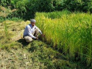 Devlet teşvik etti, köylüler tekrar tarıma döndü