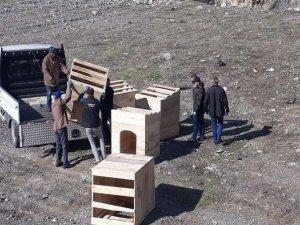Hakkari'de başıboş hayvanlar için önlem alındı