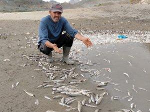 Ölmüş binlerce balığın görüntüsü korkuttu