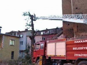 Hakkari'de tehlike arz eden ağaçlar kesildi
