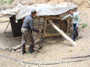 Şemdinli'de aç köpekler ahıra saldırdı