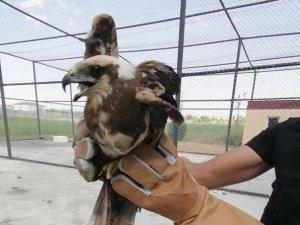 Tedavileri tamamlanan kuşlar doğaya salındı