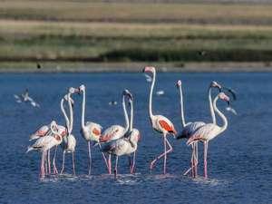 Flamingoların eşsiz dansı