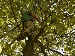 Durankaya'da ceviz ağacında düşen 1 kişi yaralandı