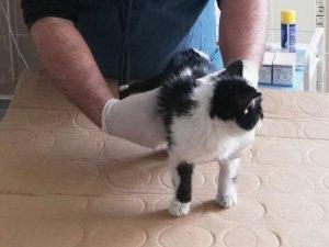 6 katlı binada düşen kedi hayatta kaldı