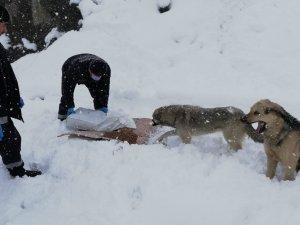 Sokak hayvanları karlı havada da unutulmadı