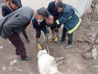 Ağzına demir saplanan köpek kurtardı