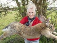 Dünyanın en büyük tavşanı çalındı