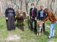 Diyarbakır annesine inek ve buzağı
