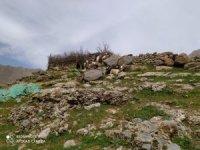 Hakkari'de kayıp 35 keçi aranıyor!