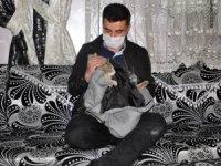 Yaralı kediye şefkat eli
