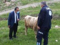Başıboş bırakılan hayvan sahiplerine idari ceza