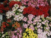 Orkide çiçekçilikten anneler günü indirimi
