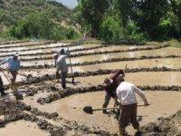 Çukurca'da çeltik ekim başladı