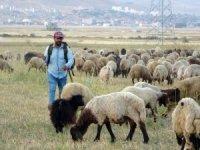 Kuraklık çobanları da vurdu