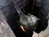 Kuyuya düşen yavru köpekleri itfaiye kurtarıldı