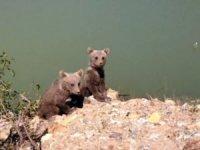 Sulama havuzuna düşen yavru ayılar kurtarıldı