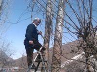 Üzümcü'de ağaçlar budanmaya başlandı