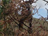 yılan kabusu