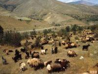 Gever'de kalp krizi geçiren çoban öldü