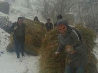 Çiftçilerin karda ot taşıma çilesi