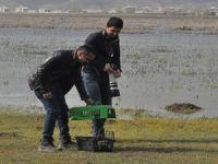 Gever'de Balıkçıl kuşu tekrar doğaya bırakıldı