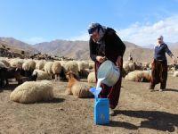 Hakkarili Berivanlar ve çobanlar barış istiyor
