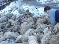 Çorum'daki heyelanda 110 hayvan telef oldu