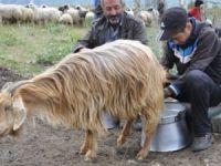 Tuncelili çobanın TEOG başarısı