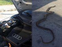 Otomobilde 3 metre yılan çıktı