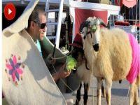 Ünlü şarkıcı kurbanlık koyunlarla denize girdi