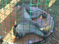 Hakkari'de örümcek maymun kurtarma operasyonu