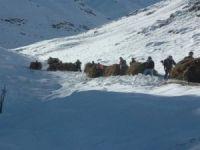 Karlı dağlarda ot taşıma çilesi başladı