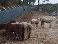 At keserlerken jandarma bastı!