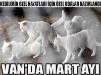 Van kedileri için Mart hazırlığı