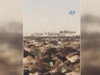 Arabistan Katar develerini sınır dışı etti!