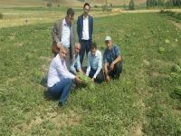 Yüksekova'da Aspir, Karpuz ve Slajlık Mısır yetiştiriciliği!