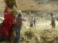 Hakkari'deki çiftçilerin patos mesaisi başladı!