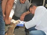 Hakkari'de tedavi edilen yaban keçisi doğaya bırakıldı