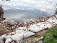 Yüzlerce at ve eşek kafası ile kemikleri bulundu