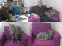 Hakkari'de yaralı dağ keçisi tedavi edildi