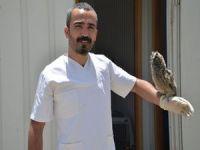 Yaralı Baykuşlar tedavi altına alındı
